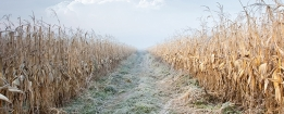 Some 24,000 hectares of farmland have been affected by severe frost in the Mexican state of Sonora.
