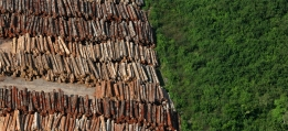 Logging causes great deforestation in the Amazon