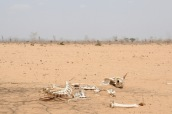 Severe drought affecting hundreds and thousands in Somalia.